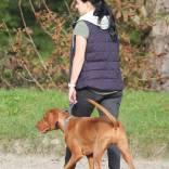 lopen-hond.jpg
